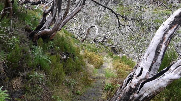 Madère - Chemin aux arbres morts, ambiance étrange !