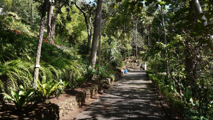 Madere - Jardin botanique 1ère allée