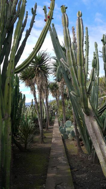 Madere - Jardin botanique - Attention çà pique !