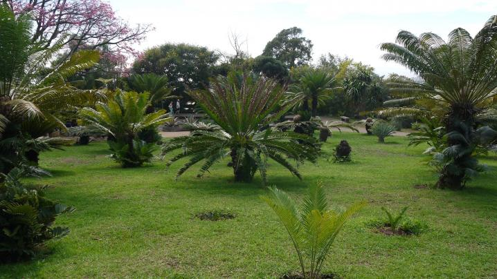 Madere - Jardin botanique - Collection de palmiers