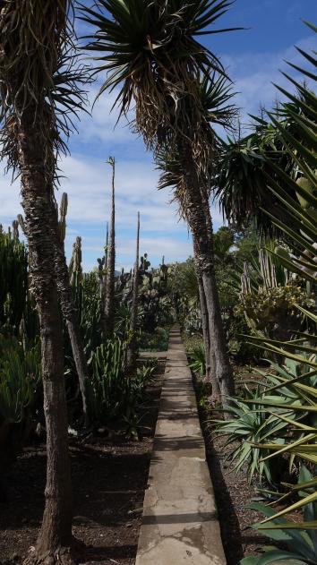 Madere - Jardin botanique - De belles allées plantées