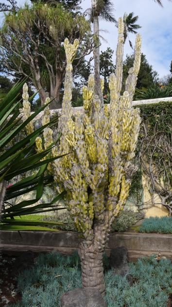 Madere - Jardin botanique - De drôles de plantes