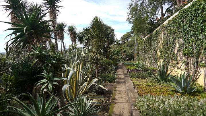 Madere - Jardin botanique - Des cactées et des plantes grasses à perte de vue