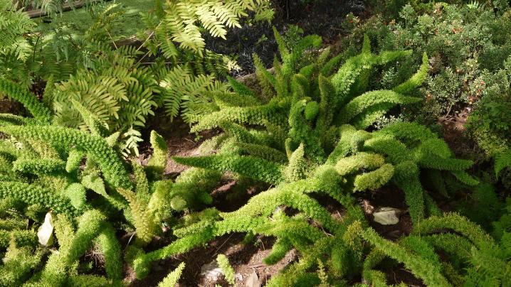 Madere - Jardin botanique - Des plantes originales et variées