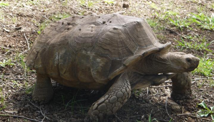 Madere - Jardin botanique - Il y a même des tortues