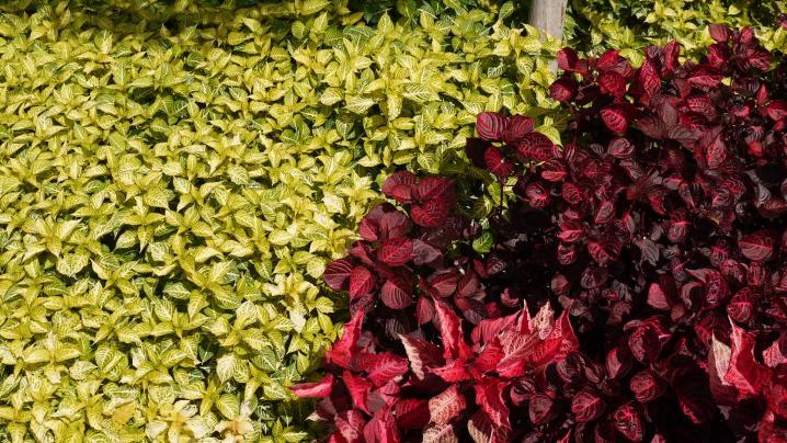 Madere - Jardin botanique - Jeu de couleurs au fil des variétés