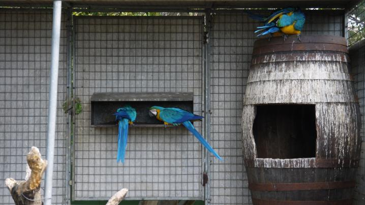 Madere - Jardin botanique - Les perroquets