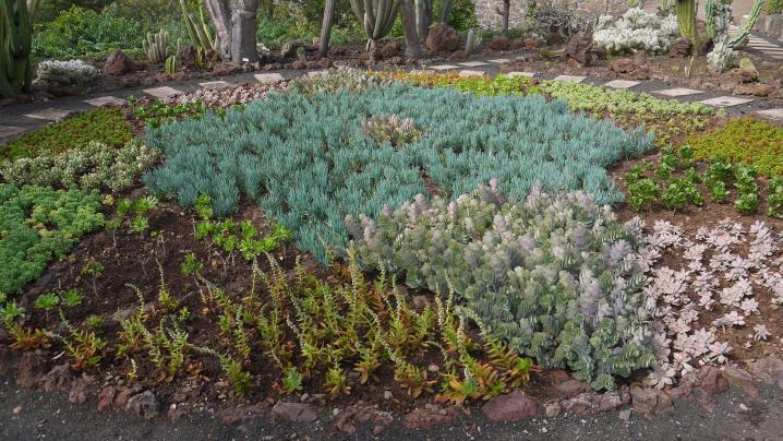 Madere - Jardin botanique - Les petites espèces ont aussi leur place !