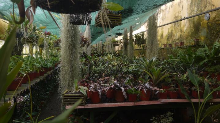 Madere - Jardin botanique - Multiplication des plantes