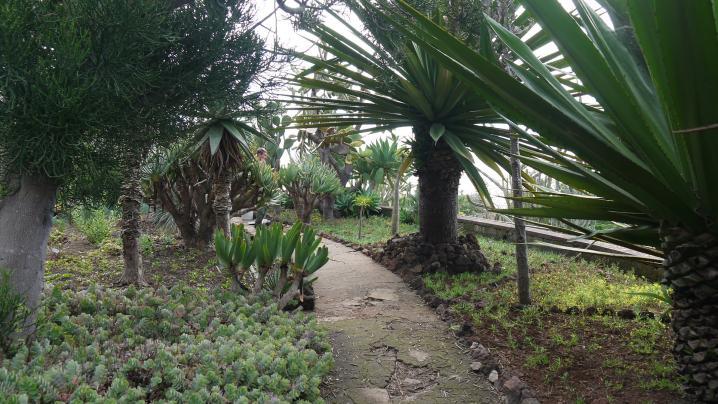 Madere - Jardin botanique - On poursuit la déambulation au fil des allées plantées