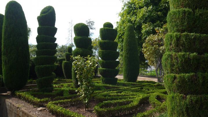 Madere - Jardin botanique - Cculptures végétales