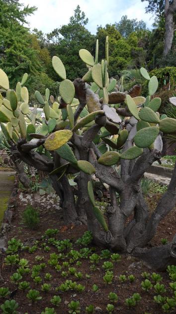 Madere - Jardin botanique - Une impressionnante collection de plantes grasses