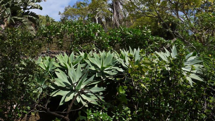 Madère - Jardin botanique, une multitude de plantes