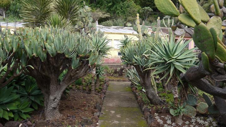 Madere - Jardin botanique - Une superbe collection de plantes grasses