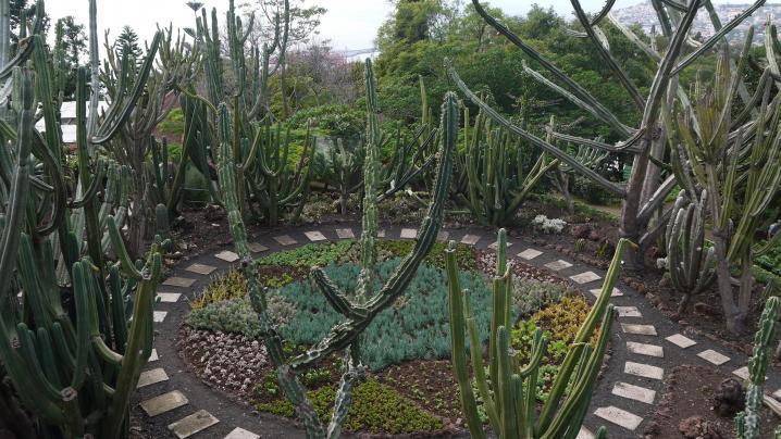 Madere - Jardin botanique - Vue sur la ronde des cactées