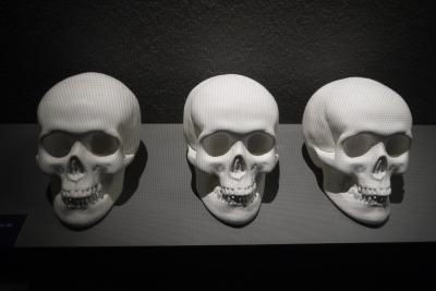 Modèles de Crânes vierges