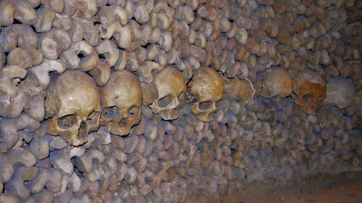 Paris - Catacombes - Alignement de crânes seuls les plus beaux sont présentés de face