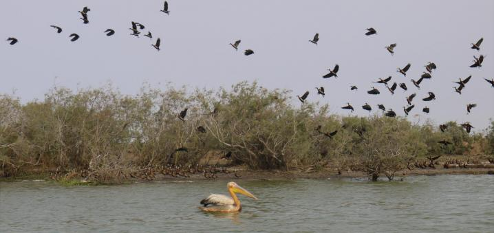 Senegal - Parc du Djoudj - 3e réserve ornithologique au monde