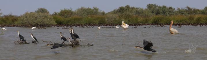Senegal - Parc du Djoudj - A bord d'une barque on peut approcher d'assez près les oiseaux sans les déranger !