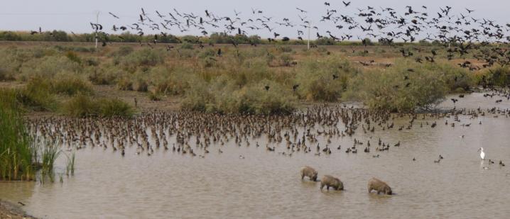 Senegal - Parc du Djoudj - A l'embarcadere