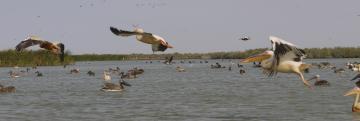 Senegal parc du djoudj l envol a 3