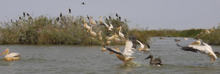 Senegal - Parc du Djoudj - L'envol