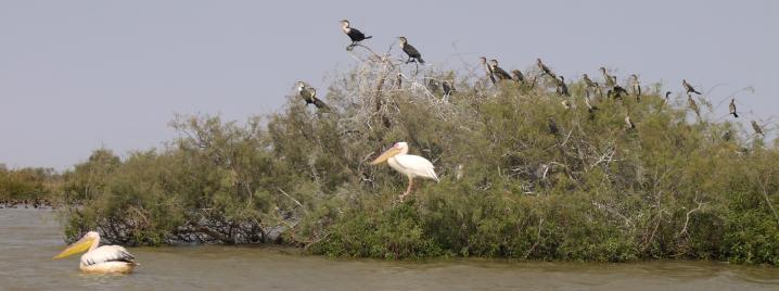 Senegal - Parc du Djoudj - Oui ils prennent la pose !