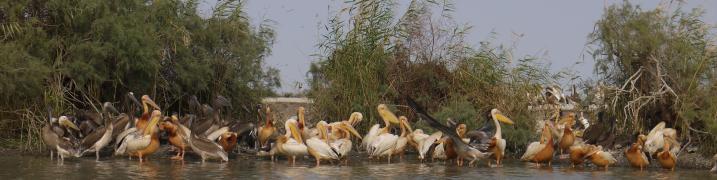 Senegal - Parc du Djoudj - Prendraient-ils la pose ?