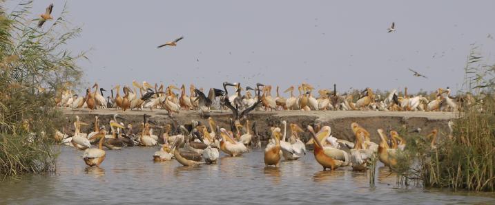 Senegal - Parc du Djoudj - Un lieu magique