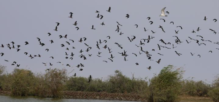 Senegal - Parc du Djoudj - Un sanctuaire ornithologique à préserver