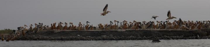 Senegal - Parc du Djoudj - Un sanctuaire ornithologique à protéger