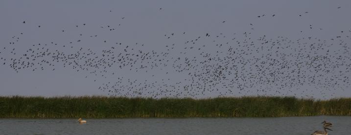 Senegal - Parc du Djoudj - Un sanctuaire ornithologique exceptionnel