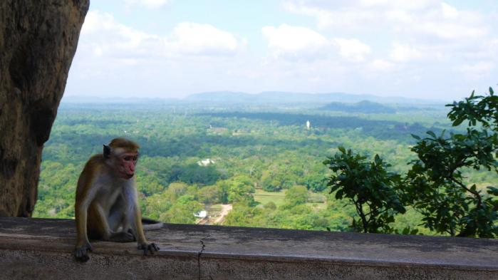 Sri Lanka - Sigiriya - Singe et panorama sur les jardins